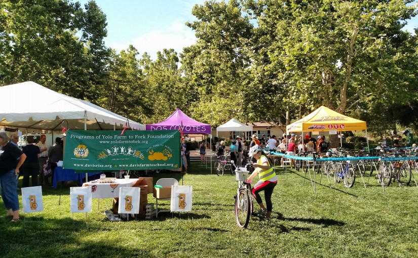 Chickens Take the Spotlight at the Tour de Cluck