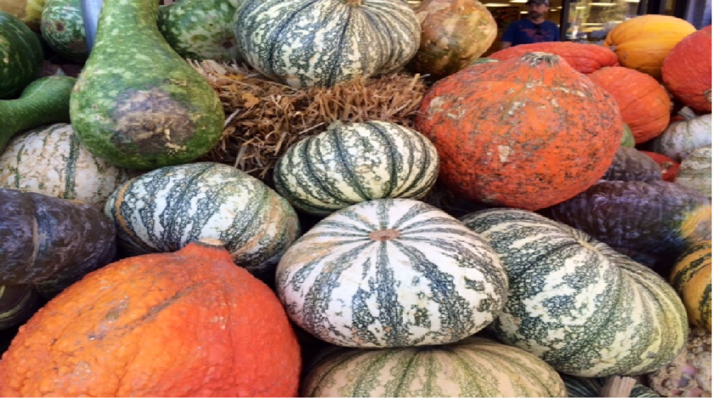 colorful pumpkins 2