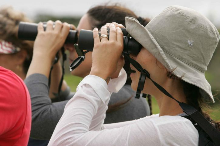 number-of-tourists-with-binoculars-tour-of-the-environment-725x483