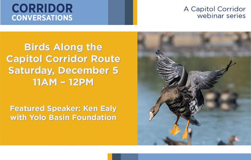 Corridor Conversations: Birds Along the Capitol Corridor Route